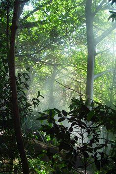 Forest Primeval - COSTA RICA. Liberia Africa, West Africa, Uganda, Monrovia Liberia, Travel Around The World, Around The Worlds, Liberian Girl, Forest And Wildlife, Caribbean Culture