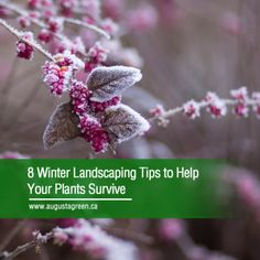 It's always a good idea to winterize your home inside and out before winter strikes. Here's a list of tips to help prepare your landscape and give your plants a better shot of surviving the cold. Landscape Lighting, Outdoor Lighting, Landscaping Tips, Irrigation, Water Features, Gardening Tips, Survival, Cold, Winter