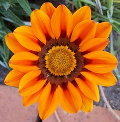 Flores Exoticas [muy lindas] - Taringa!