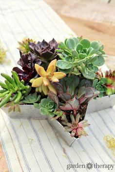 Gorgeous succulents planted in a star-shaped planter.