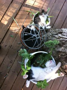 18 Cat-Plants You Probably Shouldn't Water: Cats are very much an enigma. Animal Gato, Mundo Animal, Animals And Pets, Funny Animals, Cute Animals, Cute Kittens, Cats And Kittens, I Love Cats, Crazy Cats