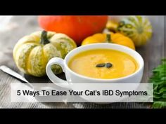 Best Natural Probiotics for Cats with IBD: Probiotics, marshmallow root and slippery elm for ... Probiotics For Cats, Ibd Symptoms, Tiger Images, Some Love Quotes, Free Facebook Likes, Drunk People, Marshmallow Root, Slippery Elm, Laser Toner