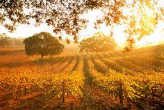 Autumn in Paso Robles, California