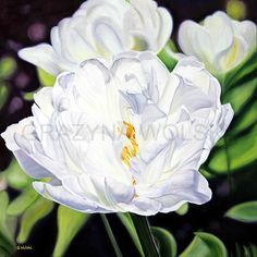 """FINE ART PRINT,  Giclee art print - """"Flawless"""", white flower painting, white tulip, original art, oil painting, handmade, wall art, nature by spiARTual on Etsy"""