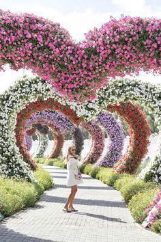 110 Dubai Garden Ideas Dubai Garden Miracle Garden Dubai