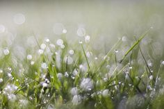 Wet Grass by Evan Leeson