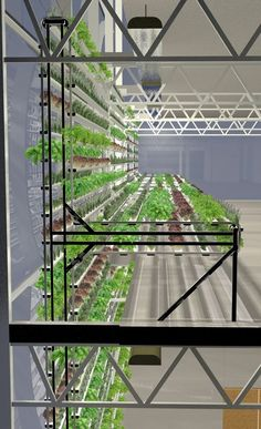 greenhouse-jackson-2