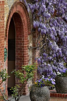 www.wisteria-avenue.co.uk
