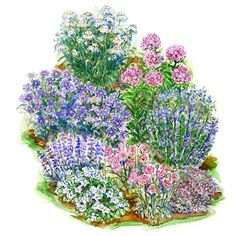 Soft-Color Summer Garden Plan    PLANT LIST  A. 1 Daisy (Leucanthemum 'Christine Hagemann'), Zones 5-8  B. 1 Phlox 'Eva Cullum', Zones 4-8  C. 2 Aster 'Monch', Zones 5-8  D. 1 Catmint (Nepeta 'Walker's Low'), Zones 3-8  E. 2 Bellflower (Campanula carpatica 'Pearl White'), Zones 4-7  F. 2 Pincushion flower (Scabiosa 'Pink Mist'), Zones 4-7  G. 2 Sedum 'Lidakense', Zones 5-9  H. 2 Veronica 'Royal Candles', Zones 3-8