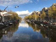 Amsterdam #seagulls #canals