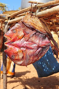 dried fish in doubleface style, Mozambique.  Photo: luca.gargano, via Flickr