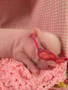 25 An adorable baby pig - meowlogy Cute Baby Pigs, Cute Piglets, Cute Babies, Baby Piglets, Cute Little Animals, Little Pigs, Cute Funny Animals, Baby Animals Pictures, Cute Animal Pictures