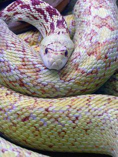 ✯ Serpente Corallo .. By Laura.foto✯ Beautiful #animal #photo #snake