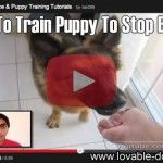 VIDEO TUTORIAL: How To Train Puppy To Stop Biting!