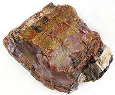 Petrified wood is agatized replacement of fossil wood.