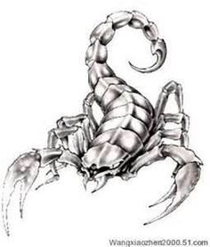 Free Cool Scorpion Tattoo Designs Design  Download