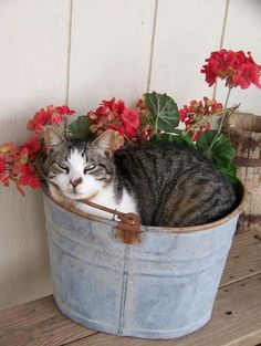 Old Bucket and Kitty..