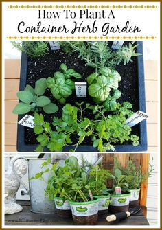Tips For Planting A One Pot Container Herb Garden & Washi Tape Herb Markers #herb_garden