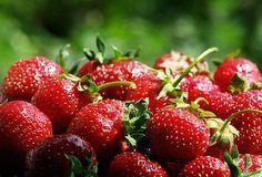 Сравнительно недавно огородники стали использовать для подкормки клубники дрожжи. Судя по отзывам, результат впечатляющий. Кроме того, это удобрение можно использовать и для других овощей и ягод. …