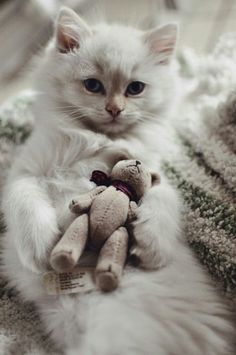❤️️Cutest Cats and Kittens
