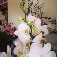 Fantastic orchids