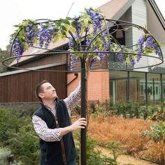 Harrod Wisteria Umbrella Support Frame Wisteria Trellis, Wisteria Tree, Wisteria Pergola, Garden Trellis, Garden Stakes, Wisteria Wedding, Pergola Swing, Pergola Roof, Pergola Ideas