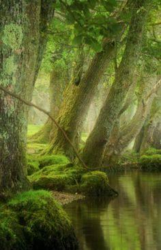 Morning mist, LochArd, Trossachs, Scotland.  By David Mould Via http://www.pinterest.com/pin/46724914859129212/… pic.twitter.com/6s40dmesS4