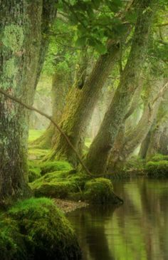 Morning mist, LochArd, Trossachs, Scotland. By David Mould Via http://www.pinterest.com/pin/46724914859129212/ … pic.twitter.com/6s40dmesS4