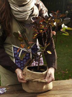 Gartentipps: So machen Sie Ihre Pflanzen winterfest