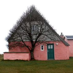 The painters house in winter  This old pink house is situated at the old dunes, a few hundred meters from the west coast, a very windy place were there isn't much that can grow. So the tree can only grow where it has shelter. It has looked this way always