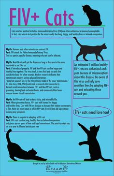 FIV+ Cats Infographic