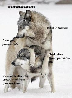Gray Wolves More grey wolves, wolf, wolves Wolf Spirit, Spirit Animal, Wolf Pictures, Animal Pictures, Beautiful Creatures, Animals Beautiful, Animals And Pets, Cute Animals, Artic Animals