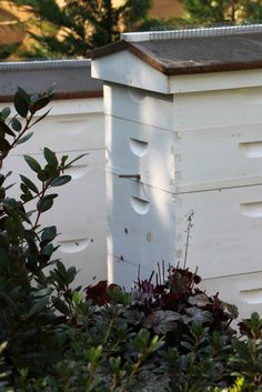 Tilly's Nest: Preparing the Hives for Winter