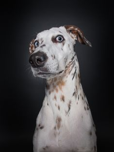 "For German photographer Elke Vogelsang, dogs can be just as expressive as humans, but unlike mankind, they don't posture for the camera. Dogs questioning the photographer's sanity is a collection of candid bloopers taken over the course of her many canine photo shoots; in her own words, it's her ""homage to dogs"" and to their sense of humor, their curiosity, and most of all, their quintessential dogginess."
