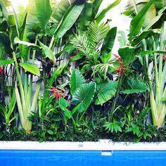 30 Top Tropical Garden Ideas 30 Top Tropical Garden Ideas 30 Top Tropical Garden Id . - 30 top tropical garden ideas 30 top tropical garden ideas 30 top tropical garden id …, -