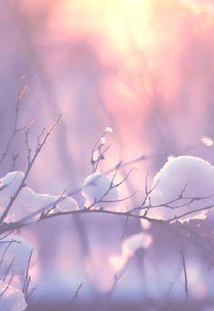 Winter blushes