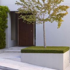 Planter with a singular tree and the cut ground cover on top minimalism at its best. Buena Vista Heights by Blasen Landscape Architecture. Modern Landscape Design, Modern Garden Design, Landscape Plans, Modern Landscaping, Contemporary Landscape, Garden Landscaping, Landscaping Melbourne, Landscaping Software, Casa Patio