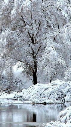beautiful tree in winter Winter Szenen, I Love Winter, Winter Magic, Winter White, I Love Snow, Snow Pictures, Snow Photography, Winter Photos, Beautiful Winter Pictures