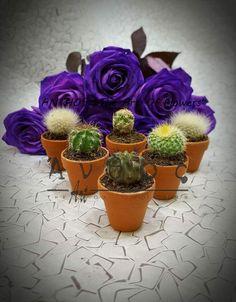 Anthos Thessaloniki Thessaloniki, Cactus, Succulents, Planter Pots, Succulent Plants