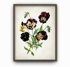 Antique Botanical Flowers Art Print - Vintage Botanical Home Decor - Antique Book Plate Illustration - Giclee Pansies Flower Picture (B165)
