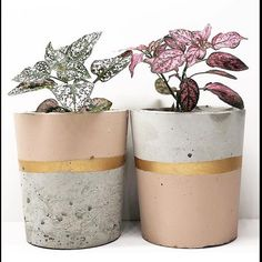First day of spring. Thanks a lot for sharing this lovely photo wit… - House Plants Concrete Pots, Concrete Crafts, Concrete Projects, Concrete Planters, Diy Planters, Succulent Planters, Succulents Garden, Pot Jardin, First Day Of Spring