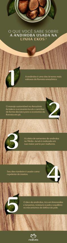 Linha EKOS e as curiosidades dos nossos ativos: Andiroba