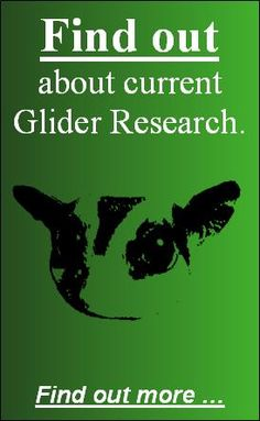The Gliders @ UNSW Research Team specialise in issues relating to the captive care and management of Sugar Gliders (Petaurus breviceps) as domestic companions (pets).