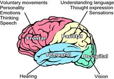 Cerebral cortex - consciousness, thought, memory, sensory input, motor input