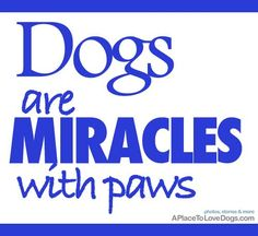 Miracles With Paws