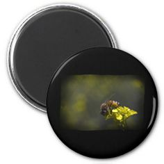 Busy Bee Magnet by Florals by Fred #zazzle #gift #photogift