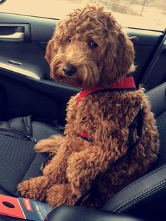 20 Priceless Photos Of Dogs The Exact Moment They Realized They're On Their Way To The Vet