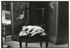 Kat op een stoel in Breitner's atelier in Amsterdam   George Hendrik Breitner   c.1890 - c.1910   Rijksmuseum   Public Domain