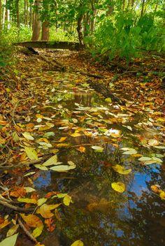 Visit #190 | Sander's Park Hardwoods | Wisconsin State Natural Area #56 | Racine County | https://wisconsinstatenaturalareas.com/2016/05/05/sanders-park-hardwoods/ | #wisconsin #wisconsinstatenaturalarea #wisconsindnr #sandersparkhardwoods  #racinecounty #discoverwisconsin #travelwi #wistatejournal #rei #explore #adventure #nature #explorewi #forest #fallcolors #colorsoftherainbow
