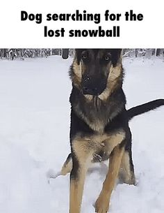Dog searching for the lost snowball GIF